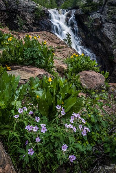 Spring Blooms Along Fish Creek