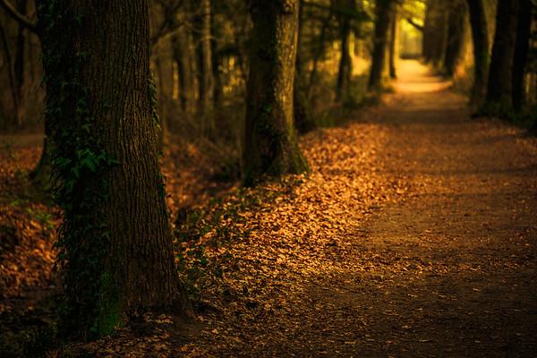 Path PB0221.2021