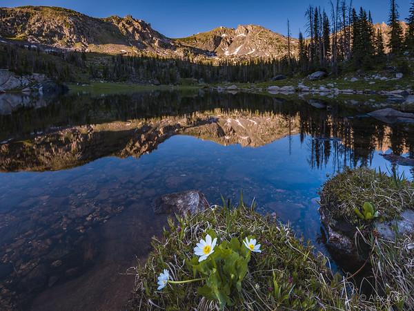 Mica Lake Marigolds