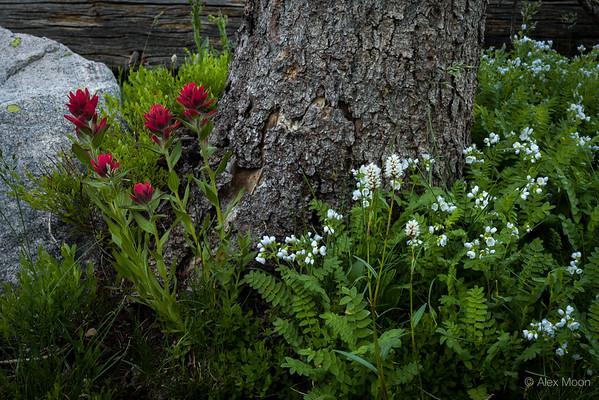 Wilderness Still Life