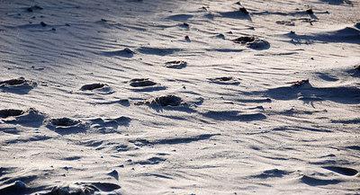 Windblown sand at North Berwick after a dog ran across it