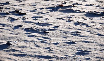 Windblown sand at North Berwick