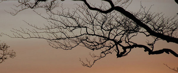 Tree branches at sunset