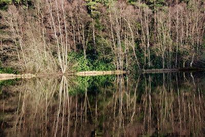 Low Pond reflections, Penicuik Estate