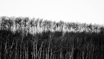 Aspen silhouette