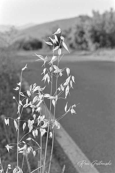 Grass by the roadside - shot on Fomapan 200 film