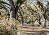 Butler Greenwood Plantation, St Francisville, Louisiana, USA