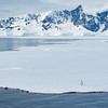 Lone Emperor Penguin on Fast Ice