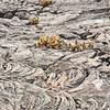 Cactus in Lava