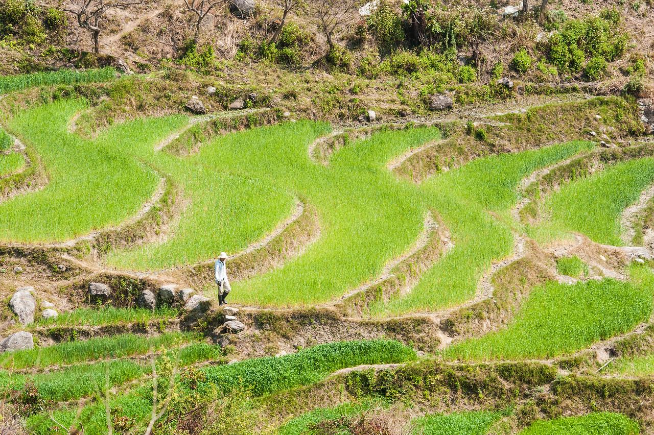A Farmer Inspects his Fields