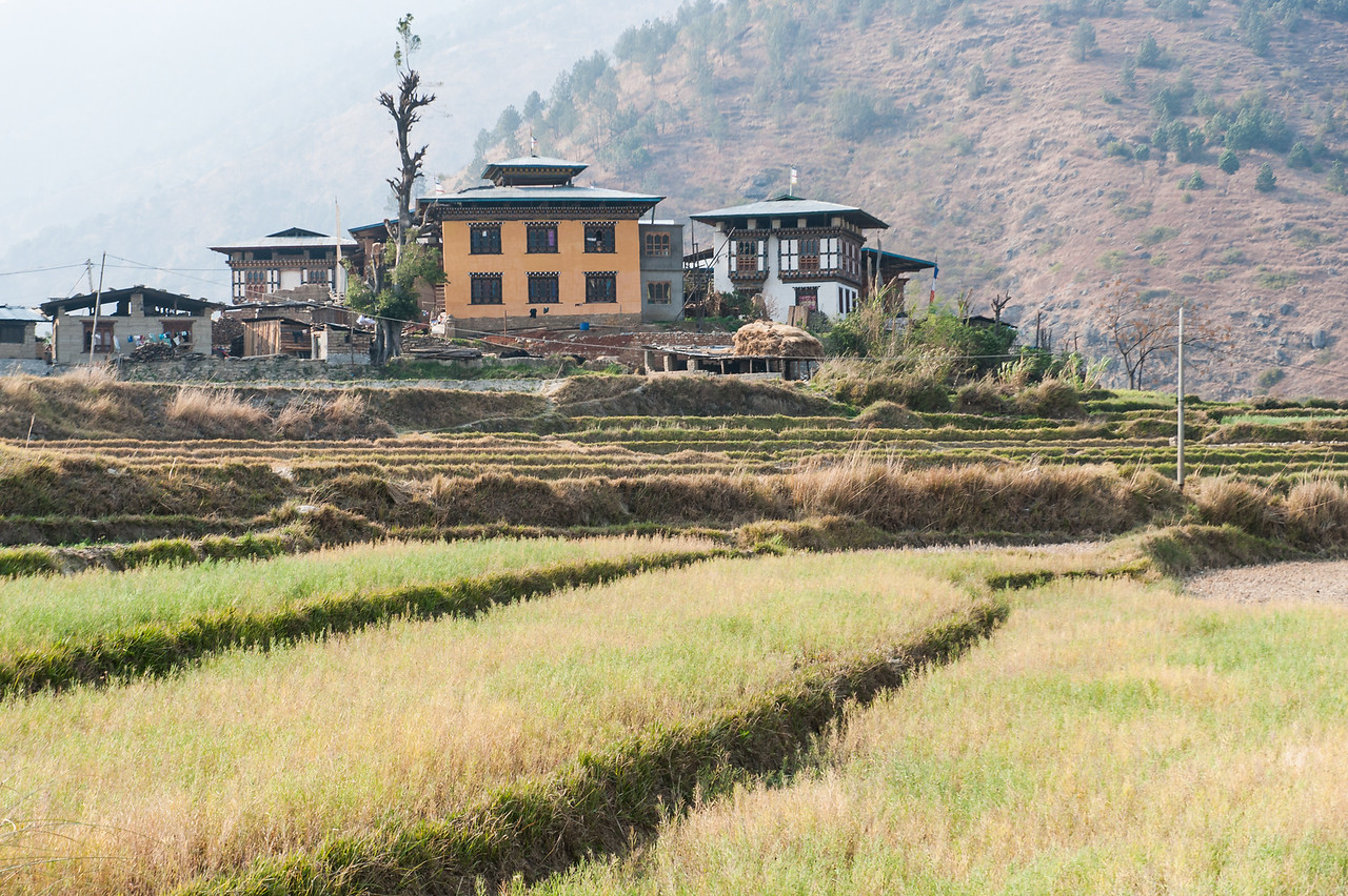 Terraced Fileds in Punakha Valley