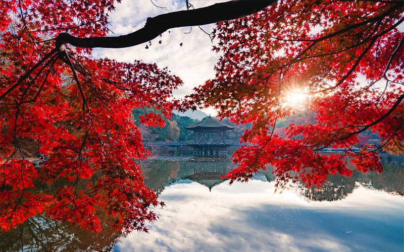 🇯🇵🍁🍂 Ukimido | Nara Park