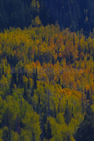 Fall in the Wasatch National Forest
