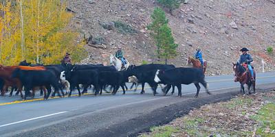 Herding Cattle in Southern Utah