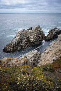 Point Lobos II