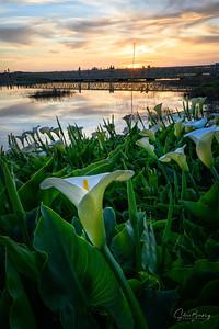 Lagoon Callas III