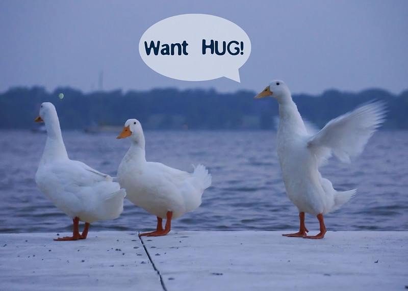 Huggable Duck