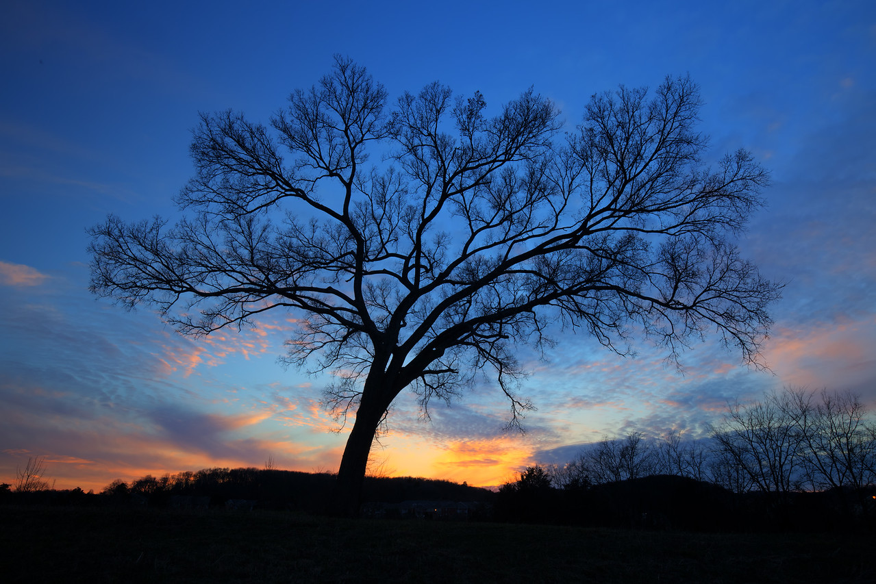 Dry Creek Tree at sunset