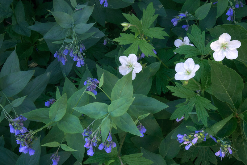 """""""Comfrey And Anemone"""""""