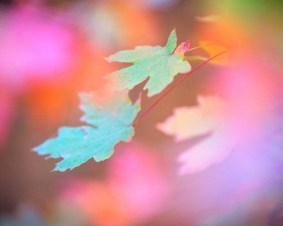 """Maple Mosaic"""