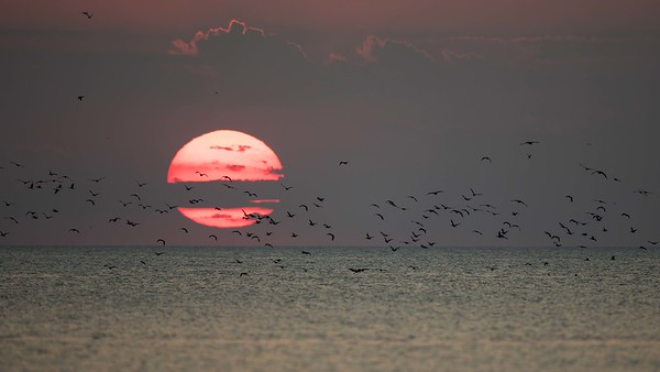 Sjöräddningsheikoptern skrämmer upp fåglarna från Själrönnen