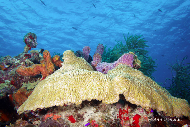 Coral Scene 2