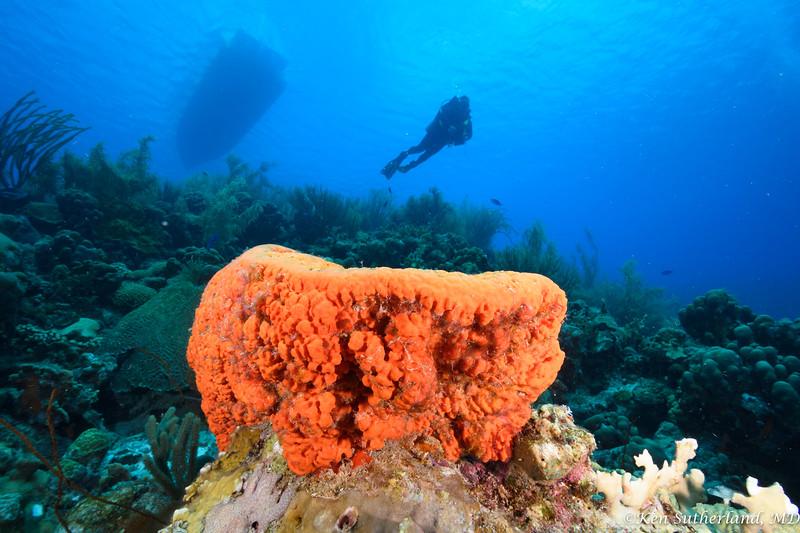 Orange Sponge Coral Scene 2
