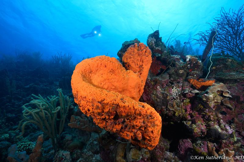 Orange Sponge and Diver