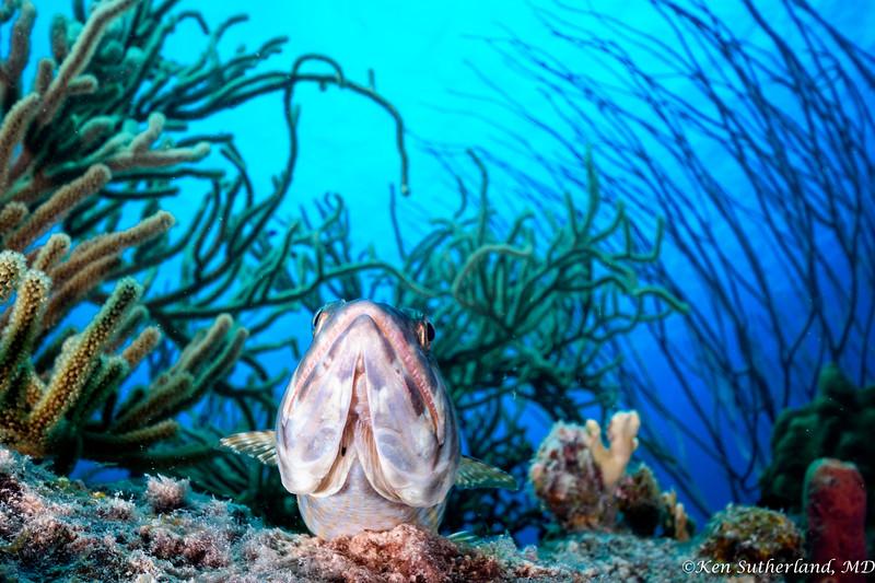 Lizard Fish Coral Scene