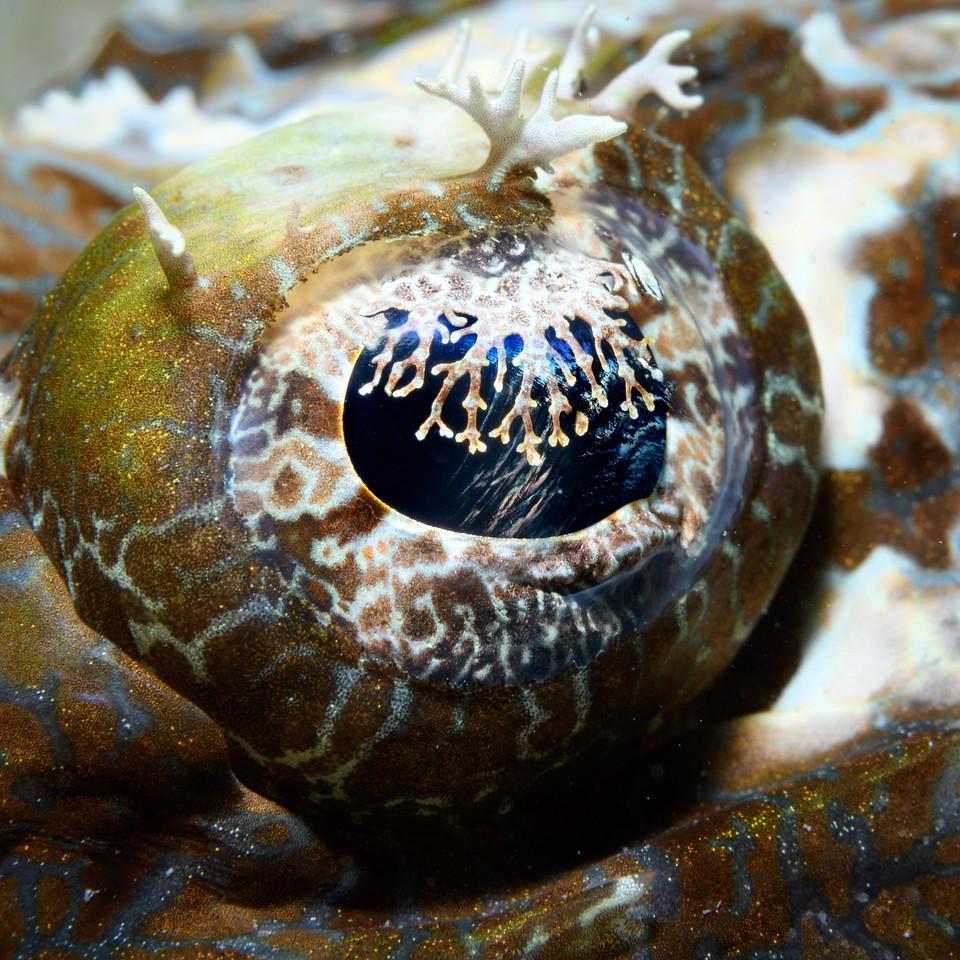 Crocodile fish eye by Ken