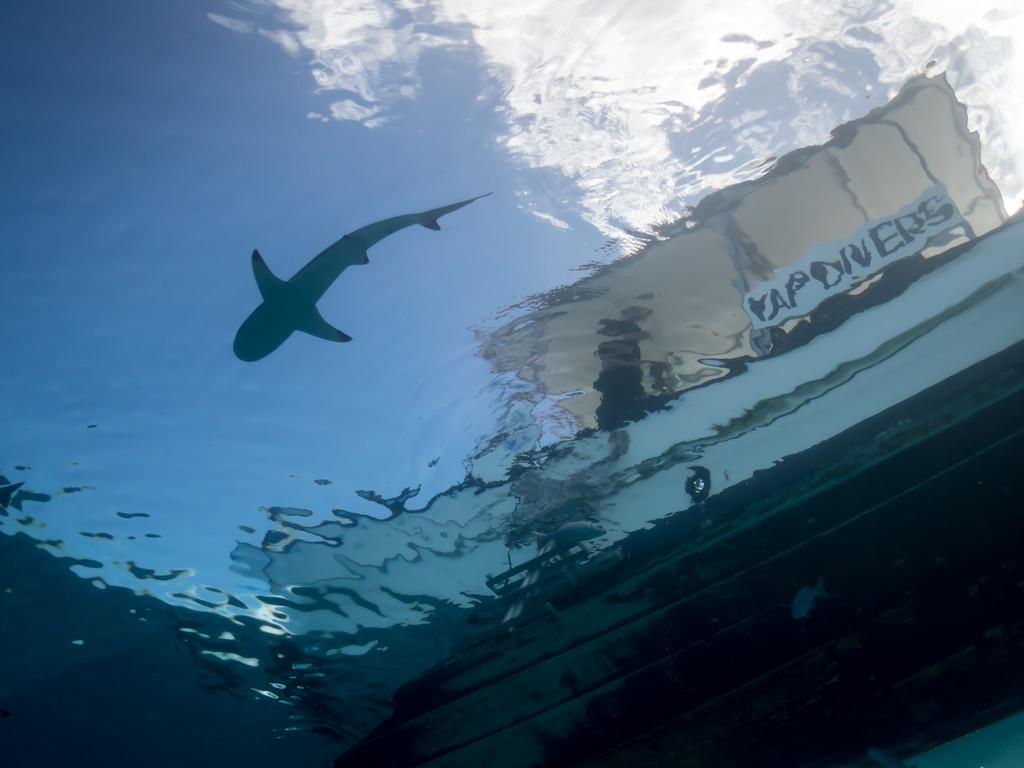 Shark and boat at Vertigo by Ann