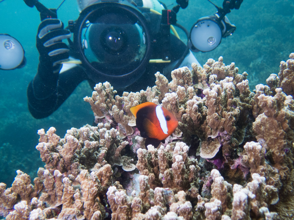 Photographer and Anemone fish by Ann
