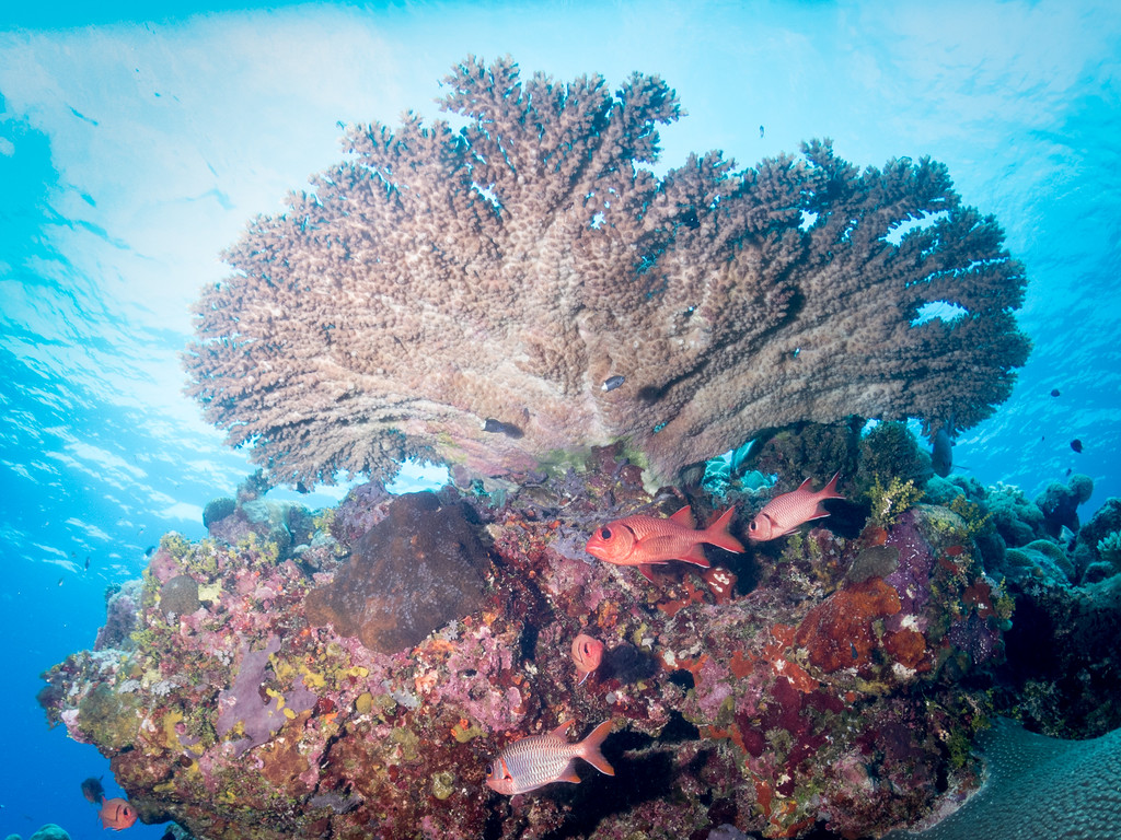 Yap Cavern Reef Scene by Ann