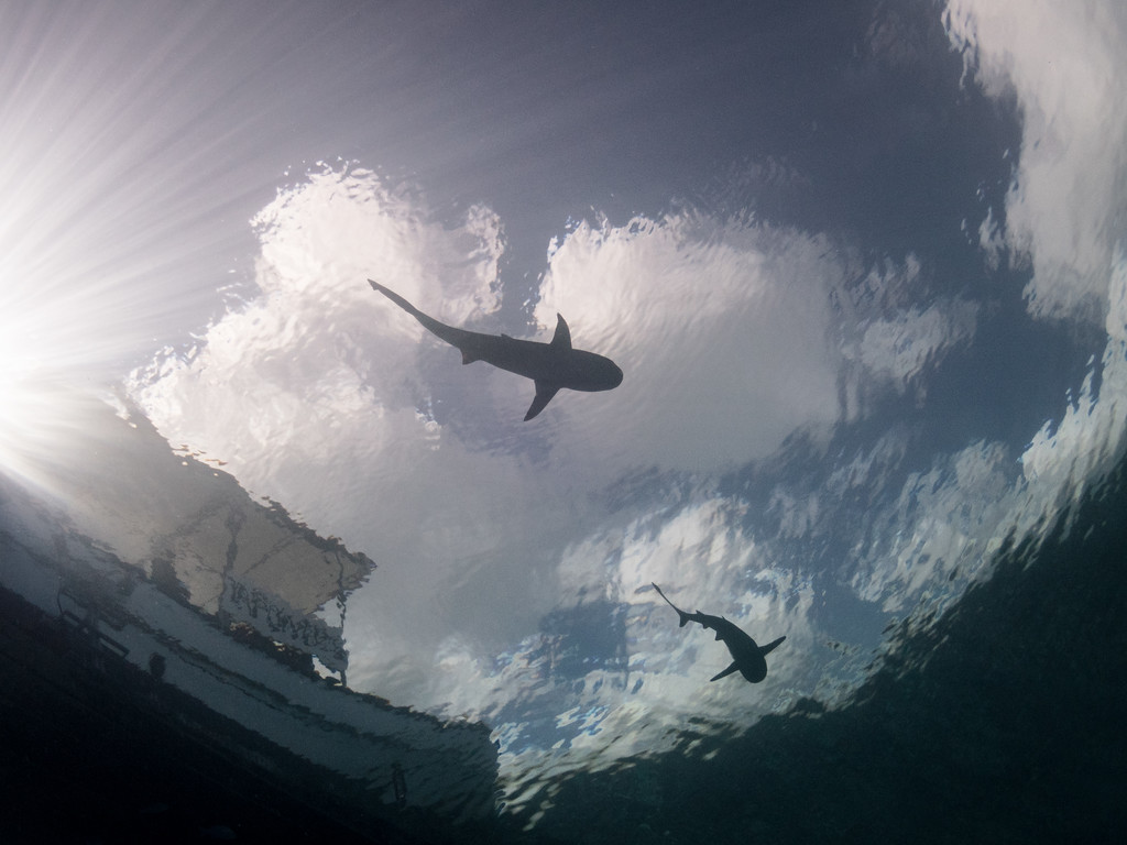 Sharks in the clouds by Ann