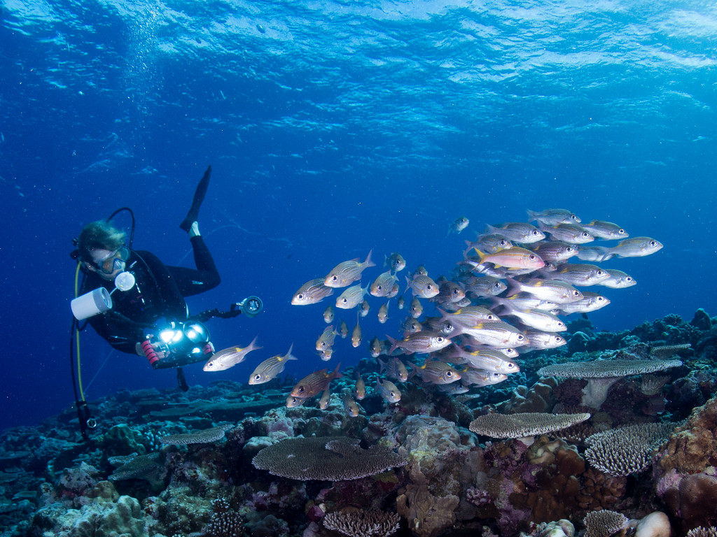 Photographer and schooling fish by Ann