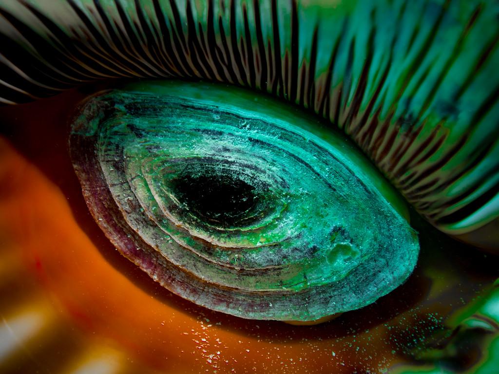 Triton Shell by Ann