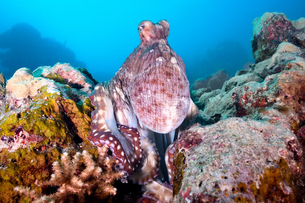 Octopus scene by Ken