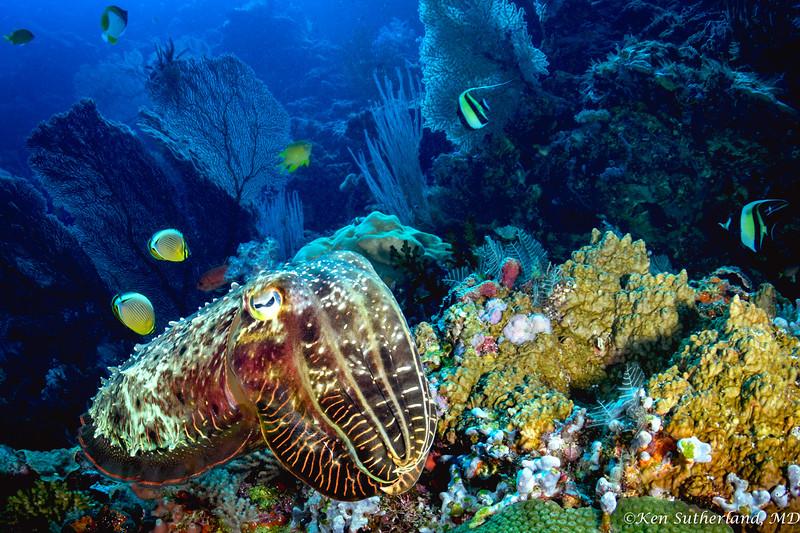 Cuttlefish Reef Scene