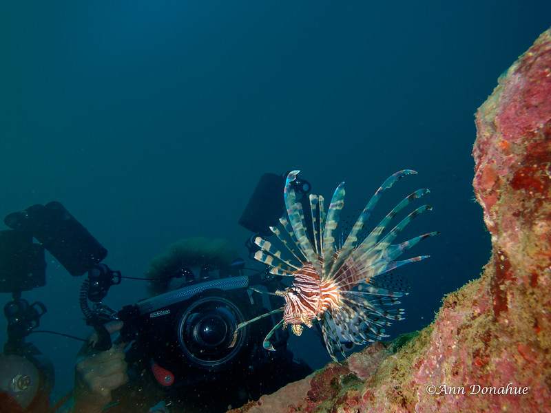Lion fish and photographer