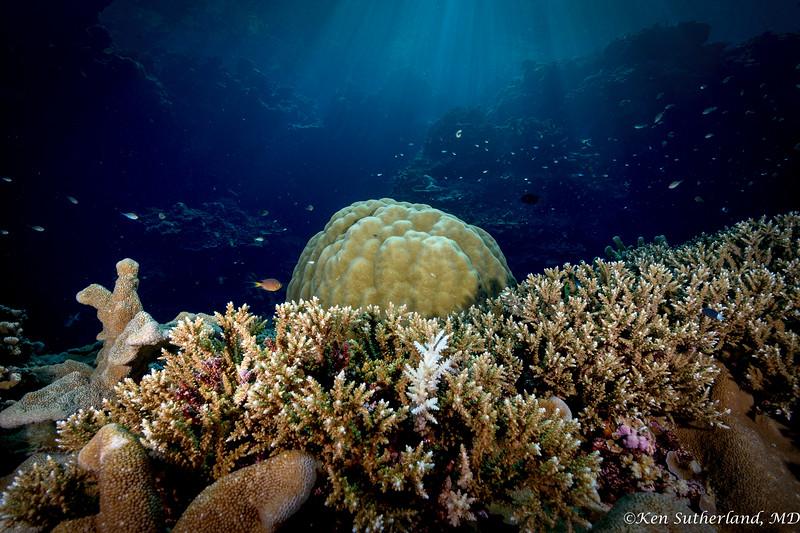 Rays  on reef