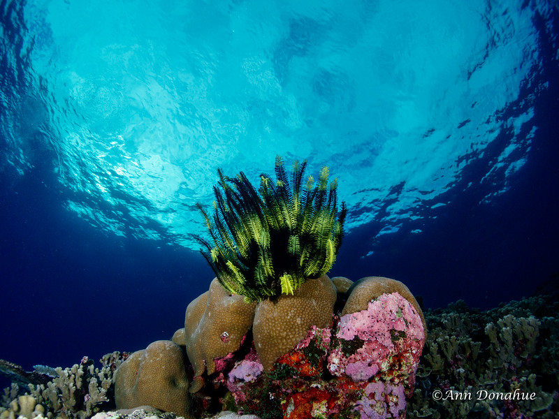 Crinoid reef Scene
