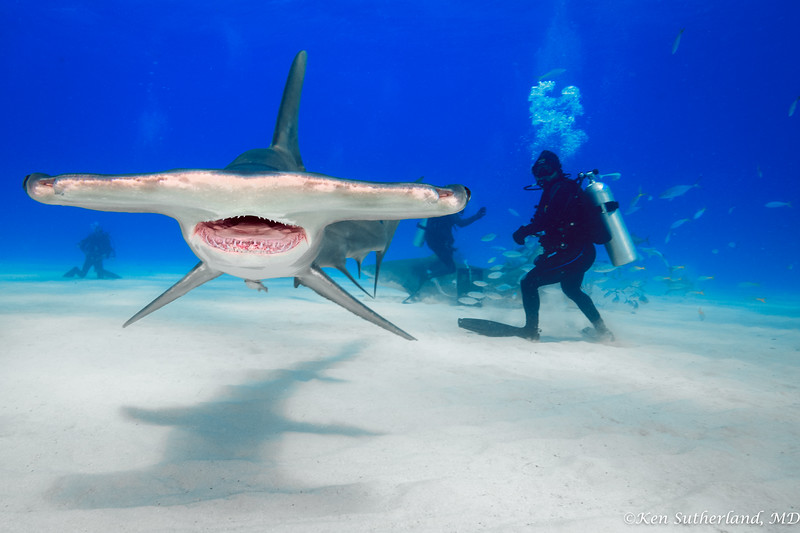 Hammerhead and photographers