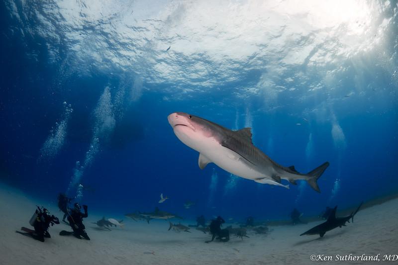 Sharks, sharks!!!