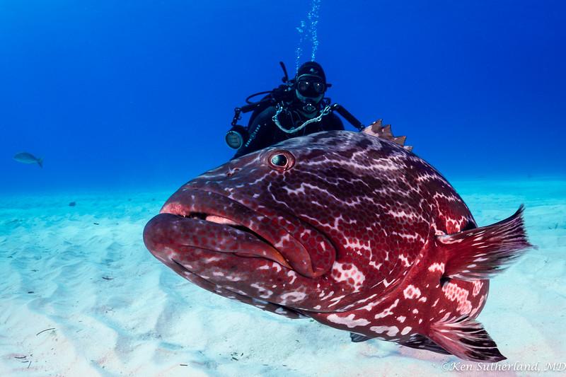 Grouper with photogapher Phil.