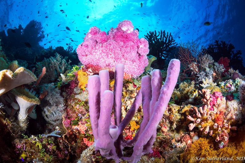 Purple Sponge Coral Scene