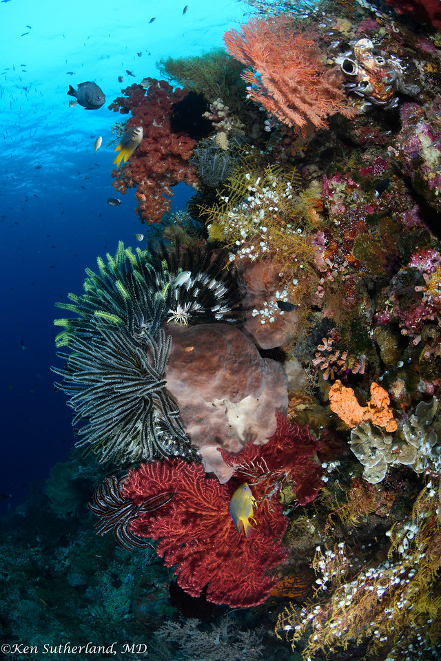 Crinoids and corals