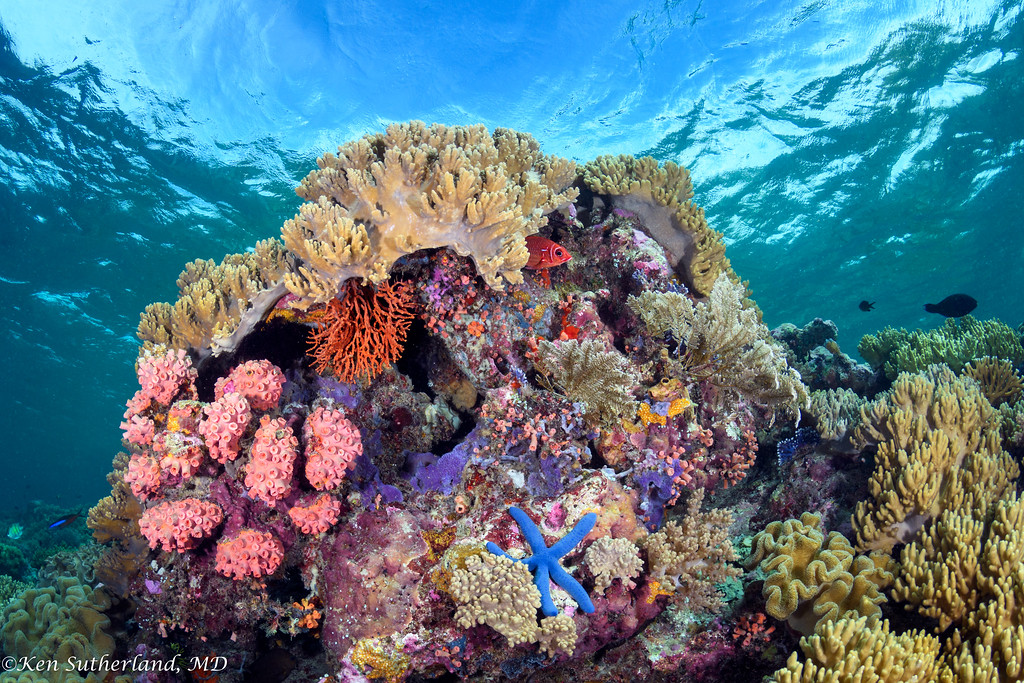 Corals in the shallows with blue Starfish