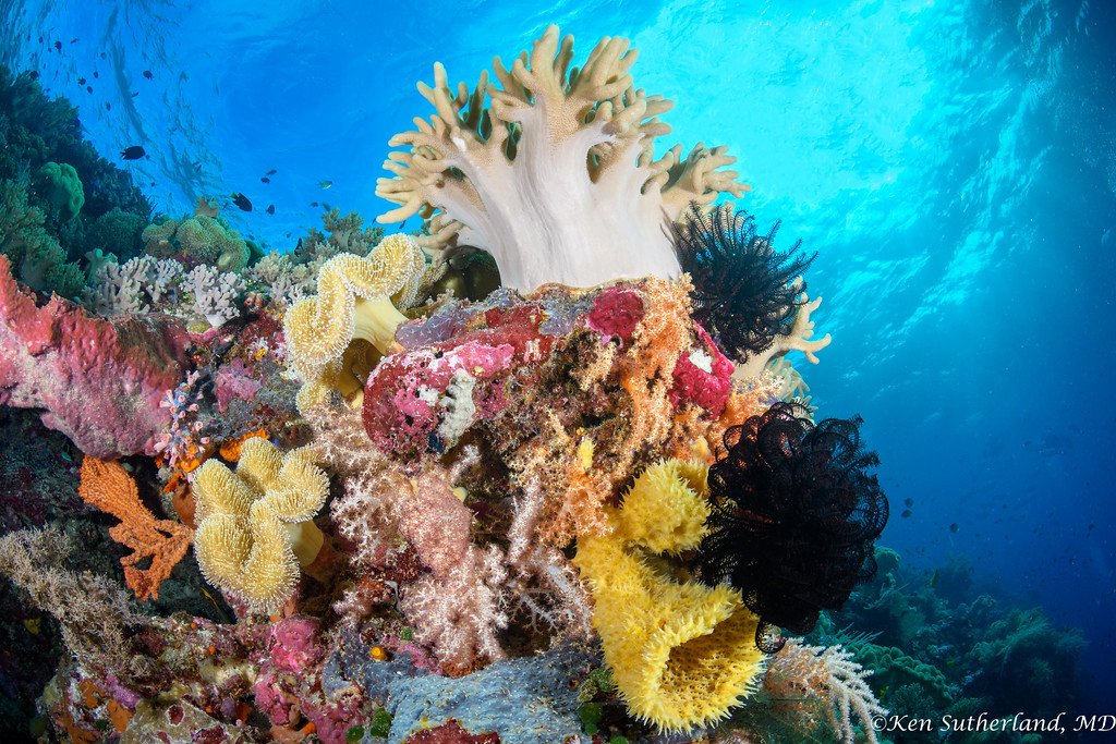Shallow Coral Scene