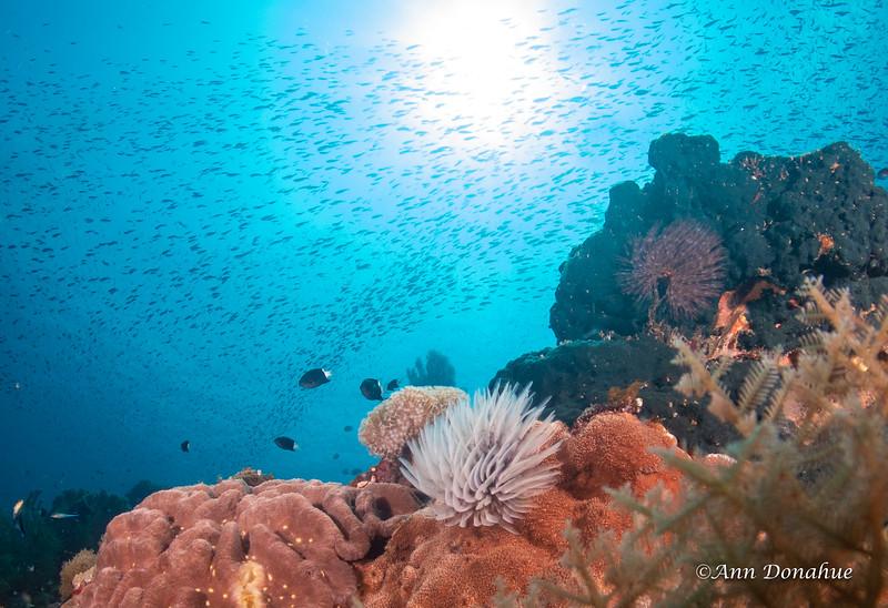Marine Worm Reef Scene