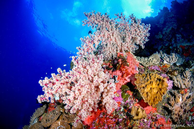Sofot Coral Reef Scene
